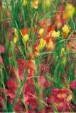 Schöne bunte Tulpen- und Irisblumen lizenzfreie stockfotos