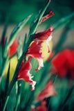 Schöne bunte Tulpen- und Irisblumen stockfotos