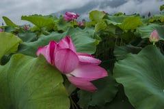 Schöne bunte Tulpen- und Irisblumen lizenzfreies stockbild
