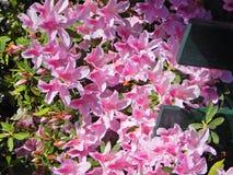 Schöne bunte und wohlriechende Blume Stockbilder