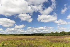 Schöne, bunte Wiese und blauer bewölkter Himmel auf einem klaren sonnigen Stockbild