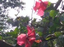Schöne China-Blume Stockbild