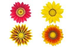 Schöne Chrysanthemen Stockbilder
