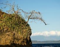 Schöne Cocos setzen, Playa Del Coco - Costa Rica auf den Strand Stockfotografie
