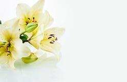 Schöne Daylilyblumen mit Kopienraum Stockfotos
