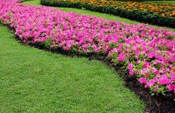 Schöne Design-Gartenarbeit-Rosa-Blume und orange Blumen nahe grünem Gras im Park Lizenzfreie Stockfotografie