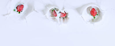 Schöne Draufsicht von vier Erdbeeren, die unten in Milch w sinken lizenzfreies stockfoto