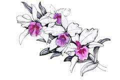 Schöne einfarbige, Schwarzweiss-Blume lokalisiert Von Hand gezeichnete Tiefenlinieanschläge Stockfotos