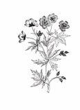 Schöne einfarbige, Schwarzweiss-Blume lokalisiert Von Hand gezeichnete Tiefenlinieanschläge Stockbilder