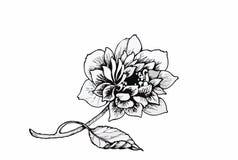 Schöne einfarbige, Schwarzweiss-Blume lokalisiert Von Hand gezeichnete Tiefenlinieanschläge Stockbild