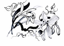Schöne einfarbige, Schwarzweiss-Blume lokalisiert Von Hand gezeichnete Tiefenlinieanschläge Stockfoto