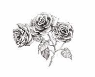 Schöne einfarbige, Schwarzweiss-Blume lokalisiert Von Hand gezeichnete Tiefenlinieanschläge Lizenzfreies Stockfoto