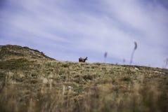 Schöne Einstellung des Weges Gebirgsumgeben durch enorme Hügel Lizenzfreies Stockbild