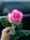 Schöne einzelne Rosarose Lizenzfreie Stockfotos