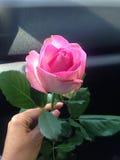 Schöne einzelne Rosarose Lizenzfreies Stockfoto