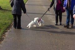 schöne einzigartige Hunde, die einen Weg im Stadtpark haben lizenzfreie stockfotografie