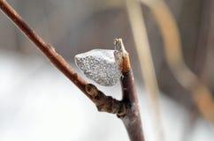Schöne Eisform auf kleinem Zweig im Wintersonnenscheinmakro stockfoto