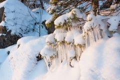 Schöne EiszapfenEisbildung auf kleinem Baum Stockfoto