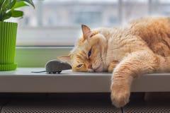 Schöne enorme weiße rote Katze, die auf Fensterbrett liegt und graue Spielzeugmaus betrachtet stockbilder