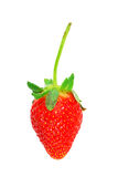 Schöne Erdbeeren getrennt auf Weiß Stockfoto