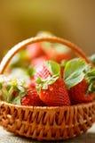 Schöne Erdbeeren im Korbhintergrund Lizenzfreie Stockbilder