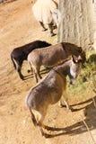 Schöne Esel im Park lizenzfreies stockfoto