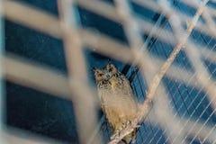 Schöne Eule in der Gefangenschaft in einem Käfig lizenzfreie stockbilder