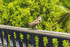 Schöne Eule, die auf einem Geländer auf grünem Baumhintergrund sitzt Stockbild