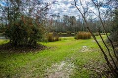 Schöne Evangeline Pond in St. Martinville, Louisiana lizenzfreie stockfotos