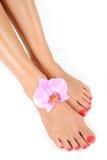 Schöne Füße mit vollkommenem Badekurort pedicure Stockfotos