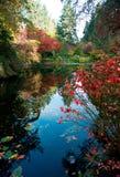 Schöne Fall-Farben im Buchart-Garten 3 Stockfotografie