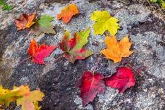 Schöne Fallbäume lizenzfreies stockfoto