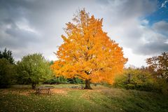 Schöne Fallbäume stockfotografie