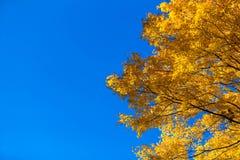 Schöne Fallbäume lizenzfreies stockbild