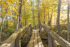 Schöne Fallfarben des Acadia-Nationalparks Lizenzfreie Stockfotos