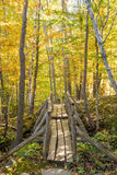 Schöne Fallfarben des Acadia-Nationalparks Lizenzfreies Stockfoto