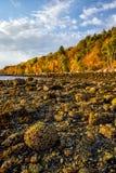 Schöne Fallfarben des Acadia-Nationalparks in Maine Stockfotografie