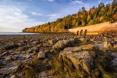 Schöne Fallfarben des Acadia-Nationalparks in Maine Stockbilder