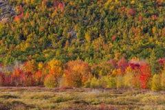 Schöne Fallfarben von Acadia, Maine Lizenzfreie Stockfotos
