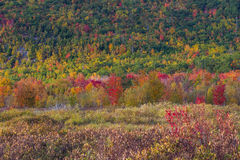 Schöne Fallfarben von Acadia, Maine Stockfotos