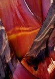 Schöne Farben der Naturen lizenzfreies stockfoto