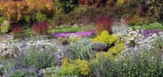 Schöne Farben von mehrjährigen Pflanzen stockfotos