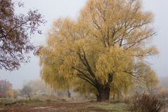 Schöne farbige Bäume des Morgens mit See im Herbst, Landschaftsphotographie Spätherbst und früher Winterzeitraum Im Freien und na Lizenzfreie Stockfotos