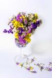 Schöne farbige Blumen in einem Weinglas Stockfotos