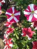 Schöne farbige Blumen im Park Lizenzfreie Stockfotografie