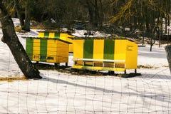 Schöne farbige hölzerne Bienenstöcke auf schneebedeckter Wiese nahe bei dem Waldbunten beweglichen Bienenstockbienenhaus Hölzerne Stockfoto