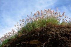 Schöne Feldblumen auf sonnigem Hügel stockfotografie