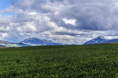 Schöne Felder Stockfoto