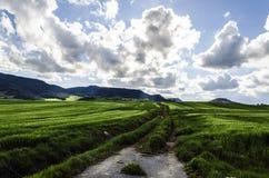 Schöne Felder Stockfotos