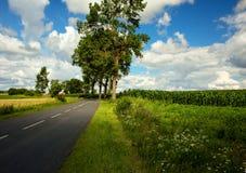 Schöne Felder mit Asphaltstraße unter blauem Himmel mit Wolken herein Stockbild